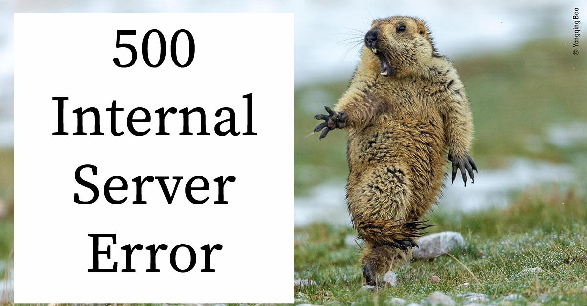 The five hundred error image